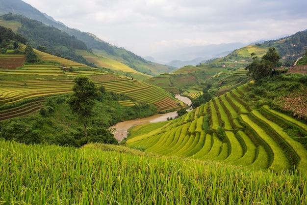 Paisagem de arrozal em socalcos de mu cang chai, yenbai, norte do vietnã Foto Premium
