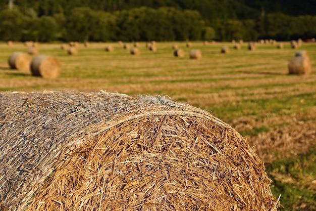 Paisagem de belas paisagens. fardos de feno em campos colhidos. república checa - europa. agricultura Foto gratuita