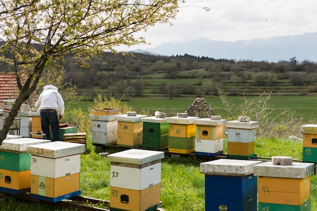 Paisagem de fazenda de mel Foto gratuita