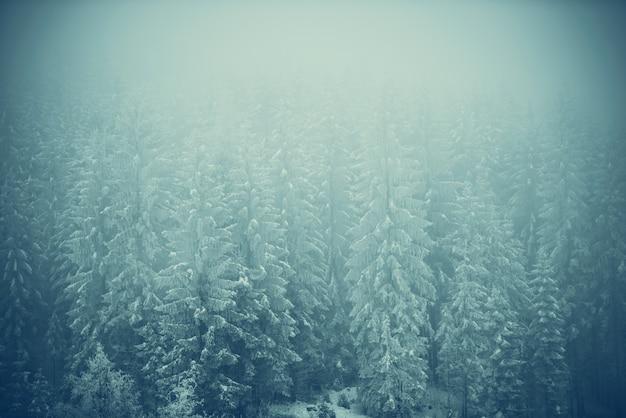 Paisagem de floresta congelada Foto gratuita
