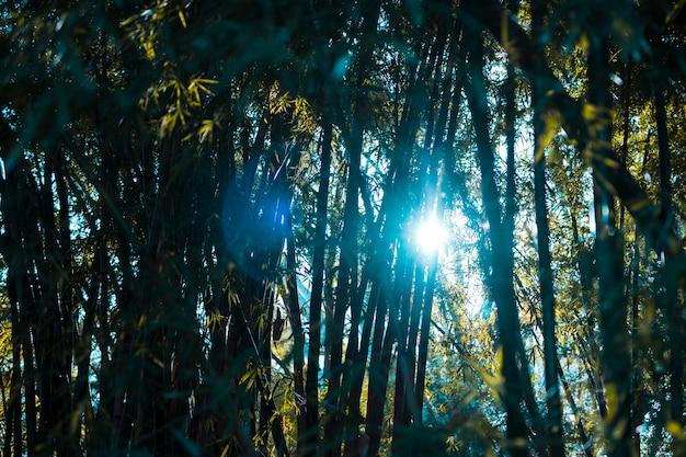 Paisagem de floresta de bambu Foto gratuita