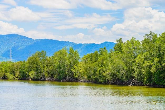 Paisagem de floresta de mangue linda na tailândia Foto gratuita