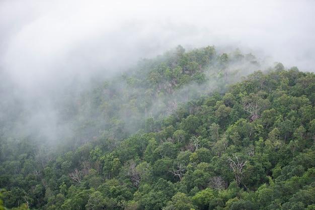 Paisagem de floresta de montanha enevoada pela manhã Foto Premium
