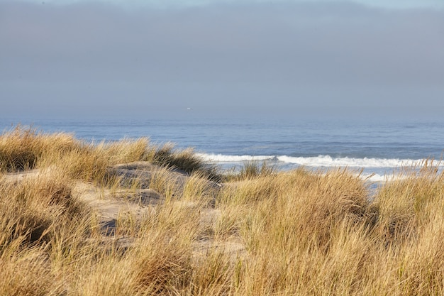 Paisagem de grama de praia pela manhã em cannon beach, oregon Foto gratuita