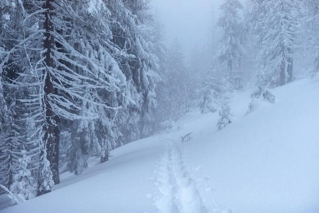 Paisagem de inverno fantástico. na véspera do feriado. a cena dramática. cárpatos, ucrânia, europa. feliz ano novo Foto gratuita