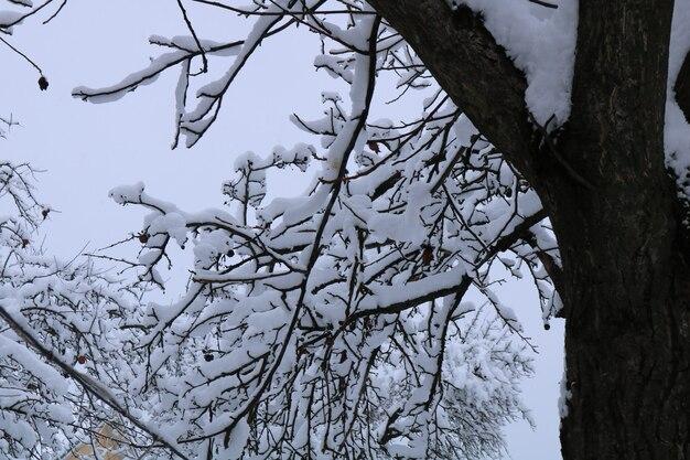 Paisagem de inverno linda com neve nas árvores Foto Premium