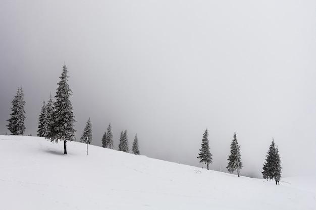 Paisagem de inverno nebuloso com pinheiros cobertos de neve Foto Premium