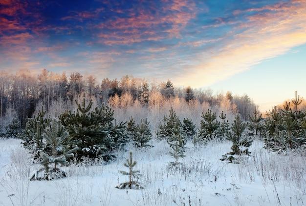 Paisagem de inverno no nascer do sol Foto gratuita