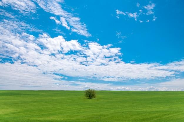 Paisagem de verão. lindo céu com nuvens e árvores solitárias no campo. Foto Premium