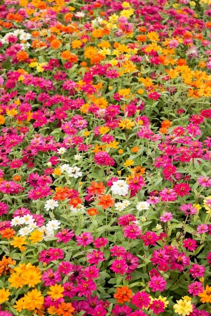 Paisagem Do Campo De Flores Lindas Foto Premium