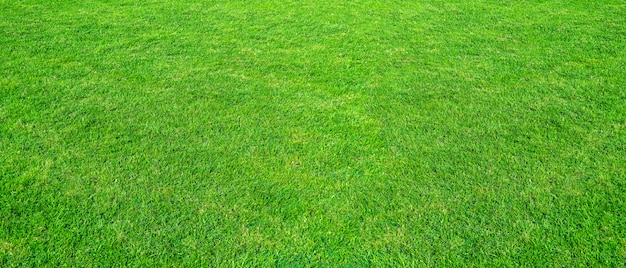 Paisagem do campo de grama no uso verde do parque público como o fundo natural. textura da grama verde de um campo. Foto Premium