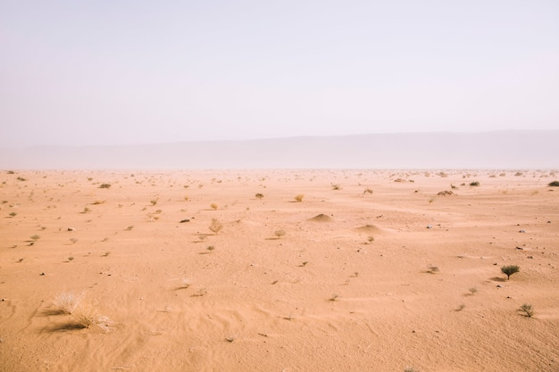 Paisagem do deserto Foto Premium