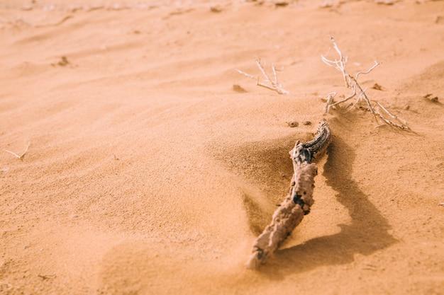 Paisagem do deserto Foto gratuita