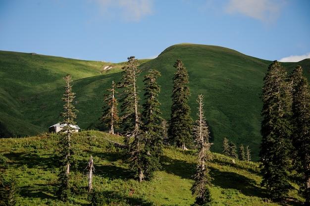 Paisagem do prado com pinheiros e construção Foto Premium