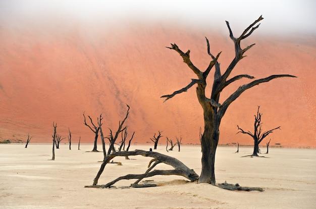 Paisagem dos mortos vlei, sossusvlei, deserto do namibe, namíbia, áfrica do sul Foto Premium