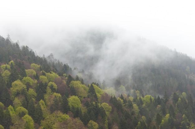 Paisagem enevoada da montanha enevoada com a floresta do abeto na baixa nuvem que encontra-se. cárpatos. Foto Premium