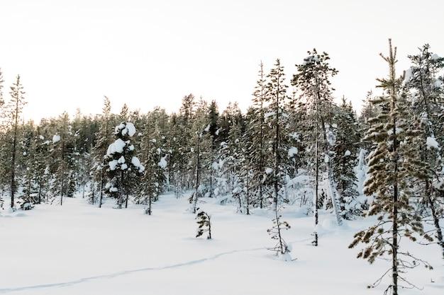Paisagem inverno, em, kiruna, lapland, suécia Foto Premium