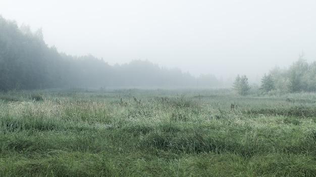 Paisagem nevoenta com floresta e campo Foto Premium
