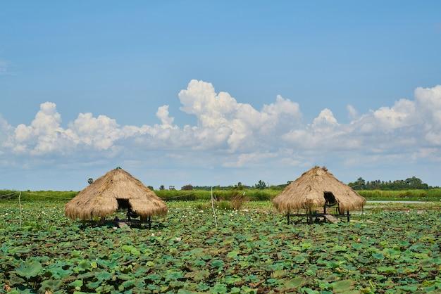 Paisagem no camboja Foto gratuita