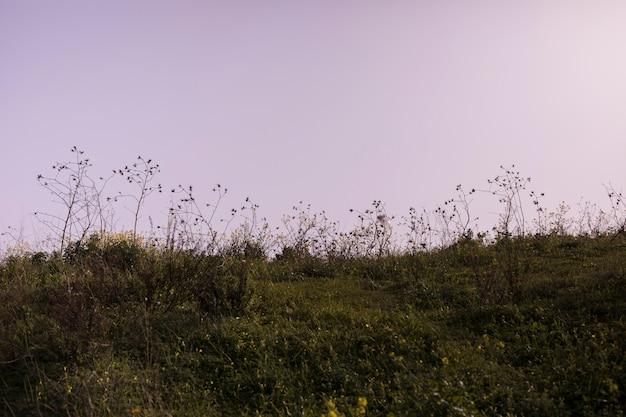 Paisagem verde contra o céu dramático Foto gratuita