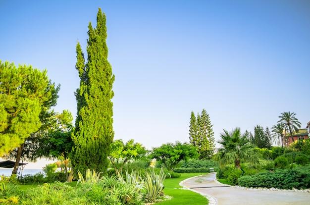 Paisagismo tropical com plantio e árvores Foto Premium