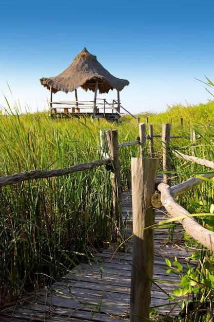 Palapa de cabana em manguezais de manguezais Foto Premium