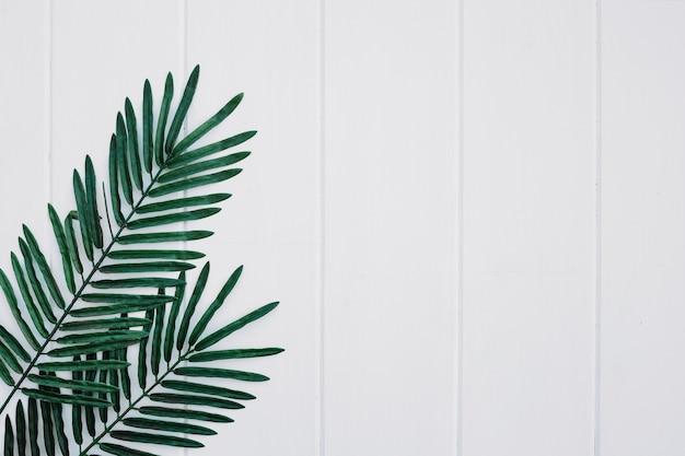 Palmas deixa no fundo branco de madeira com espaço à direita Foto gratuita