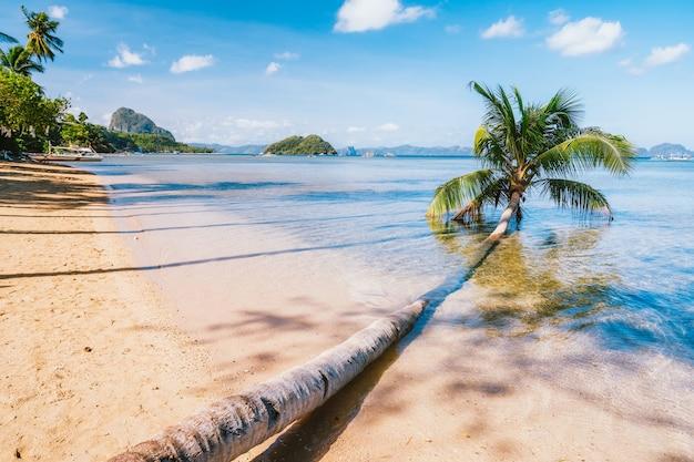 Palmeira caída na praia arenosa de corong, el nido, palawan, filipinas Foto Premium