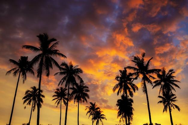Palmeira da silhueta no céu. Foto Premium