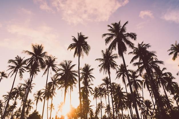 Palmeira de coco Foto gratuita