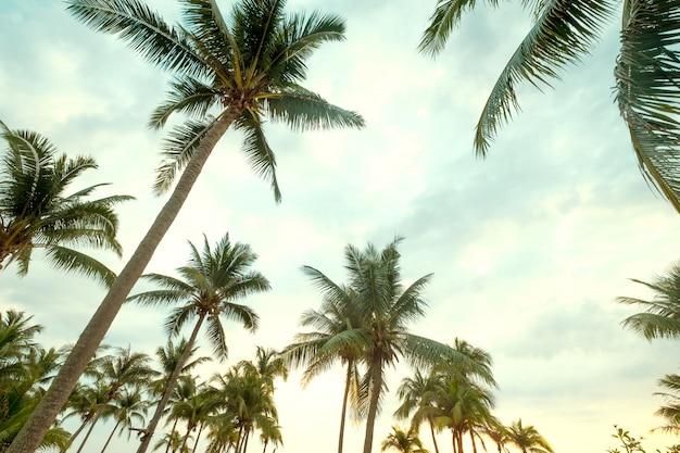 Palmeira do coco no céu azul da praia tropical com luz solar da manhã no verão, uprisen o ângulo. Foto Premium