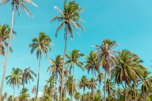 Palmeira do coco sob o céu azul. Foto Premium