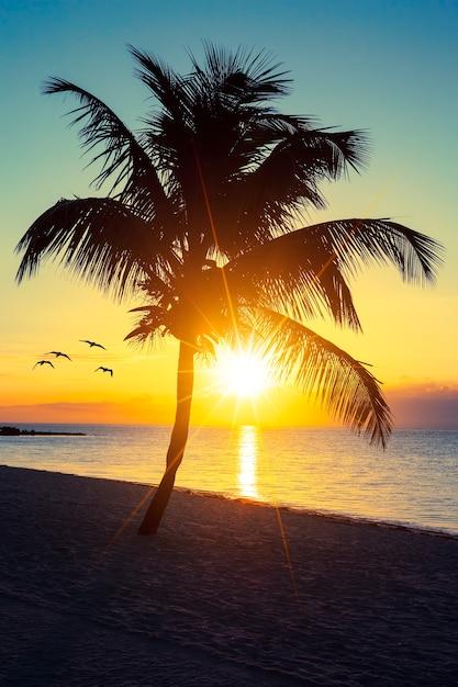 Palmeira em uma praia ao pôr do sol Foto gratuita