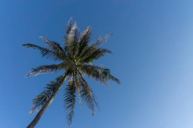 Palmeira no fundo do céu azul. Foto Premium