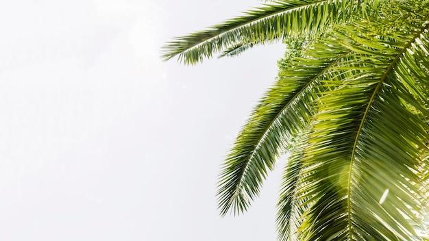 Palmeiras curvas verdes contra o céu Foto gratuita
