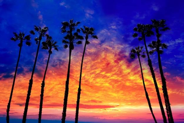 Palmeiras da califórnia pôr do sol com céu colorido Foto Premium