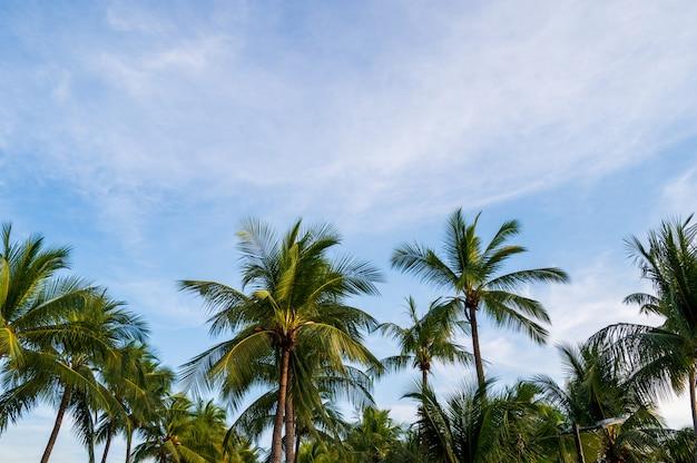 Palmeiras do coco com fundo do conceito do verão do céu e das nuvens do por do sol. Foto Premium