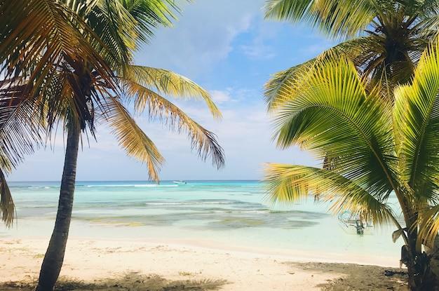Resultado de imagem para palmeiras praia
