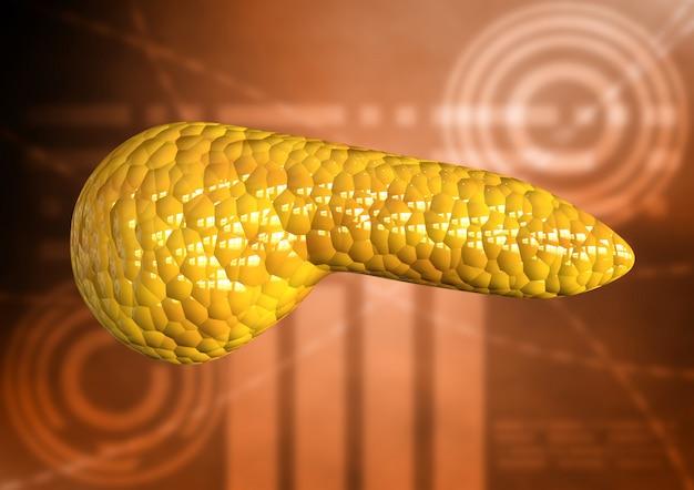 Pâncreas, órgão do corpo humano isolado no fundo científico Foto Premium