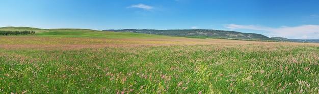 Panorama da primavera prado Foto Premium