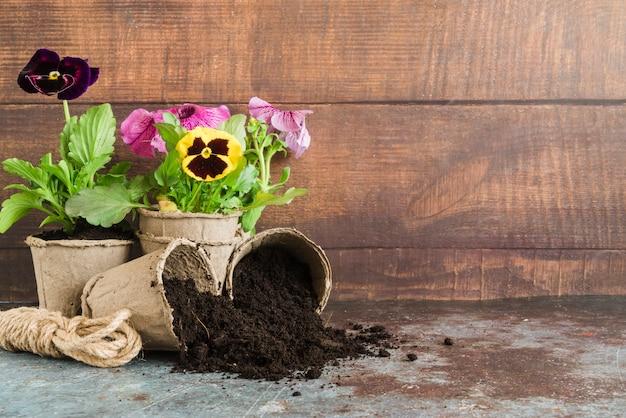 Pansy plantas plantadas nas panelas de turfa contra a parede de madeira na mesa de concreto Foto gratuita