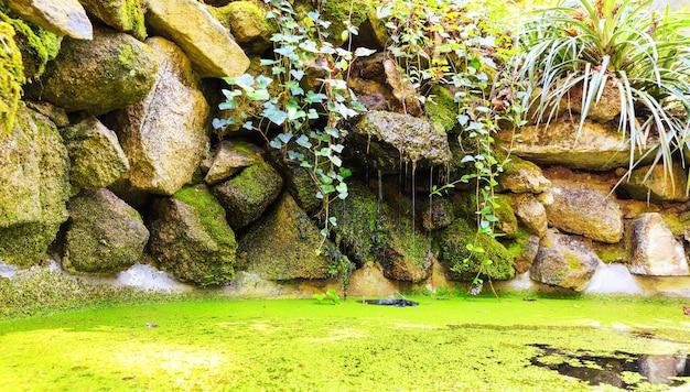 Pântano na floresta Foto Premium