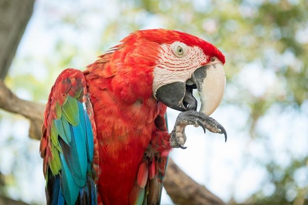 Papagaio azul e vermelho de macaw Foto gratuita