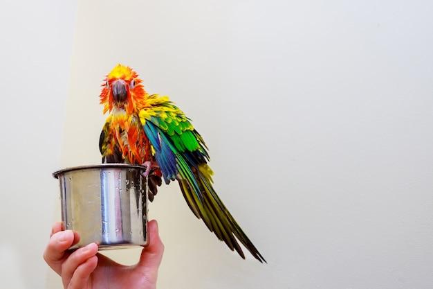 Papagaio colorido pássaro sentado salpicos no banheiro Foto Premium