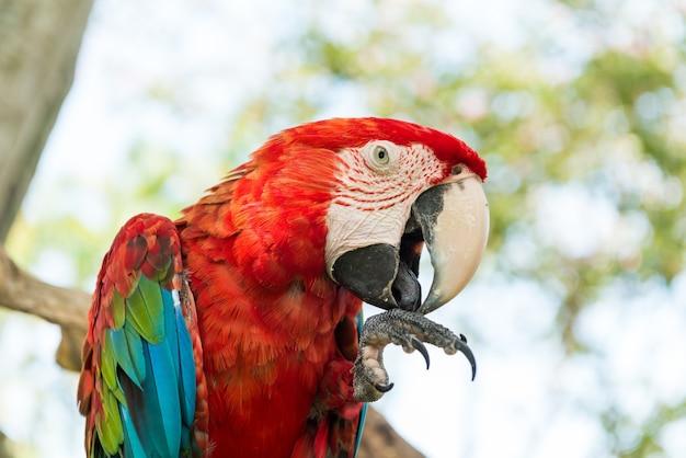 Papagaio de macaw azul e vermelho Foto gratuita