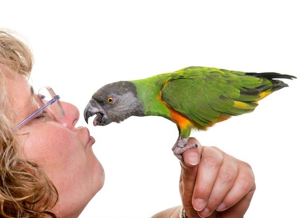 Papagaio do senegal beijando seu dono Foto Premium