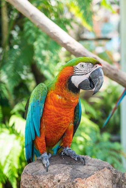 Papagaio macau Foto gratuita