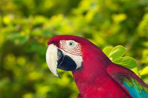 Papagaio macaw contra a natureza Foto gratuita