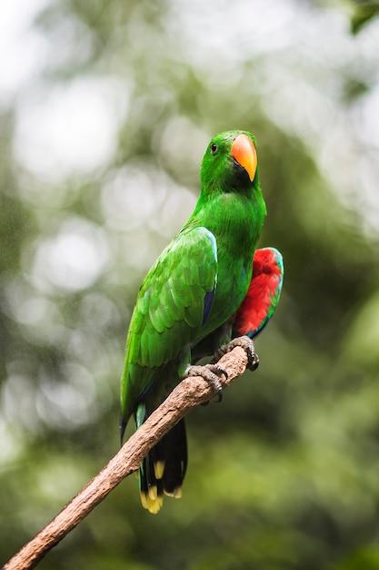 Papagaio tropical em uma filial Foto gratuita