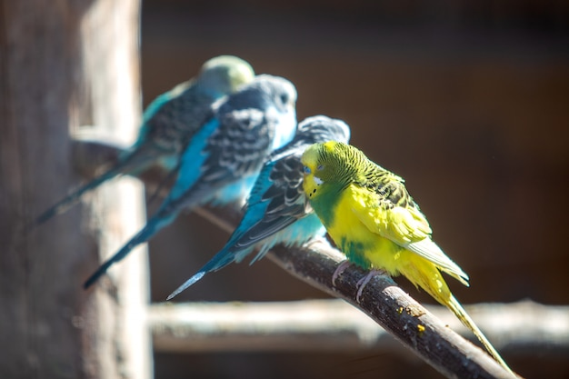 Papagaios coloridos em uma gaiola em um zoológico. Foto Premium
